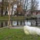 Zeehond - J.A. van  Baren